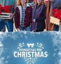 Poinsettias for Christmas (2018) online subtitrat in romana